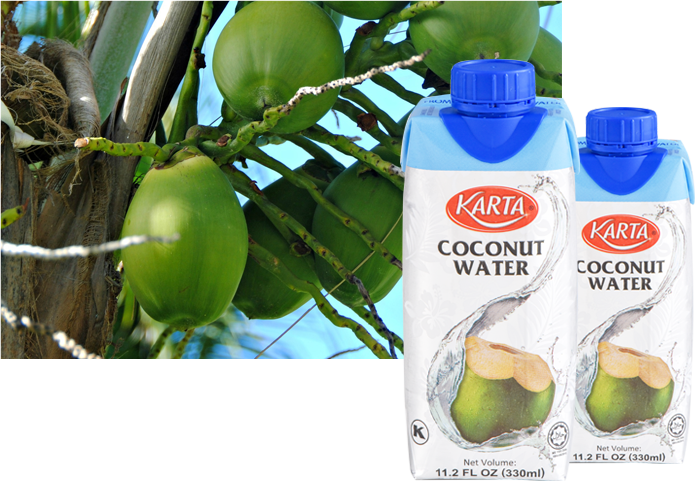 coconut1_mobile