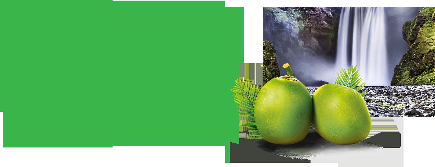 coconut2_content