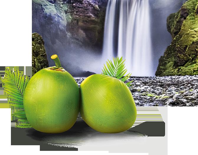 coconut2_mobile